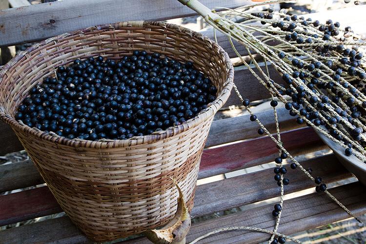 Ripe Acai Berries