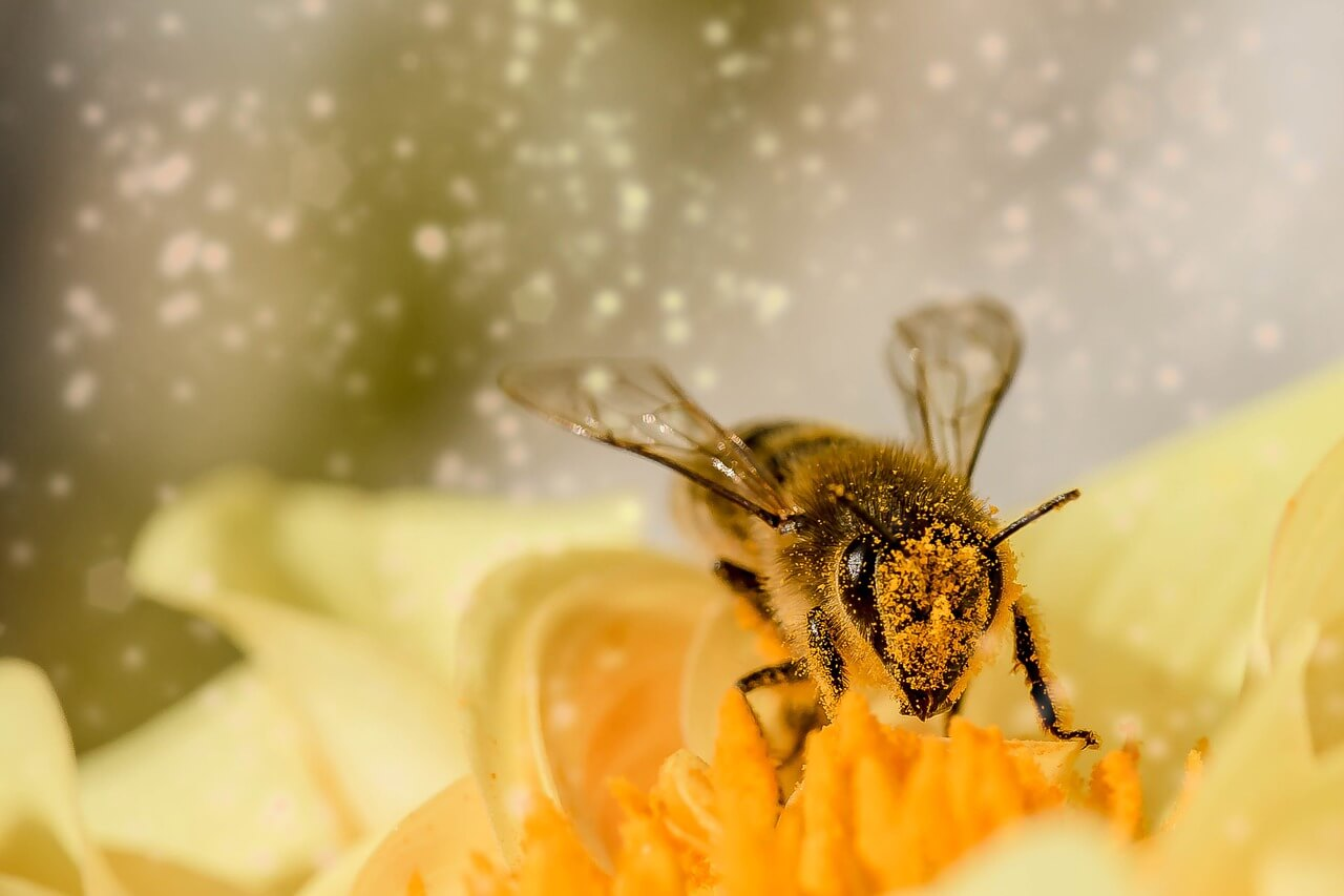 bee picking pollen